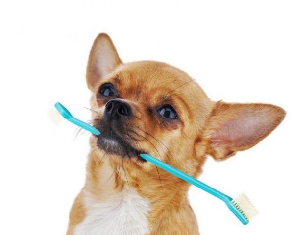 Higiene dental perros